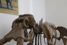 Museo Civico di Storia Naturale, Comiso, Italy