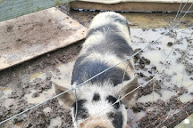 Farmtastic Animal Farm, Royal Wootton Bassett, United Kingdom