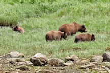 Khutzeymateen Grizzly Bear Sanctuary, Prince Rupert, Canada