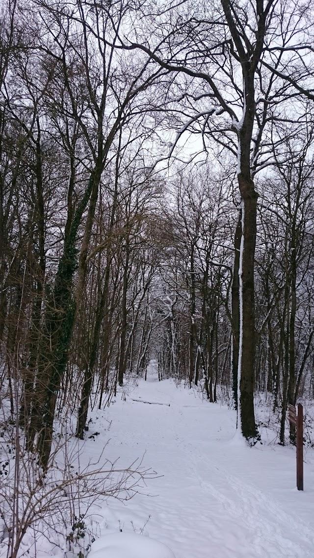 Bois de Morval