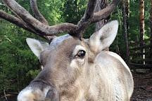 Nuuksio Reindeer Park, Espoo, Finland