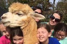 Alpacas of Smith Mountain Lake Farm, Hardy, United States