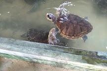 Sea Turtle Hatchery, Ambalangoda, Sri Lanka