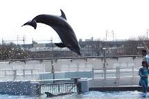 Kyoto Aquarium, Kyoto, Japan