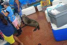 Macarron Scuba Diver, Puerto Ayora, Ecuador