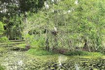 Audubon Swamp Garden, Charleston, United States