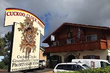 Cuckoo Clock Nest, Tamborine, Australia