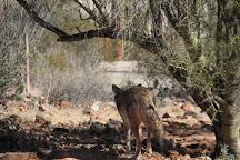 Arizona-Sonora Desert Museum, Tucson, United States