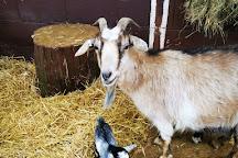 Woodside Animal Farm and Leisure Park, Luton, United Kingdom