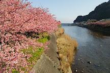 Kawazu Zakura (Kawazucho), Kawazu-cho, Japan