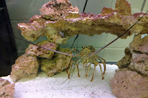 Marine Discovery Center, New Smyrna Beach, United States
