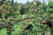 Prospect Hill Orchards, Milton, United States