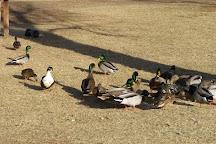 Lampe Park (County Park), Gardnerville, United States