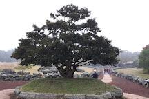 Jeju Stone Park, Jeju, South Korea