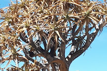 Quiver Tree Forest, Nieuwoudtville, South Africa