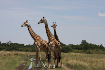 Wildlife Safari Kenya Ltd, Nairobi, Kenya