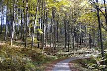 Vienna Woods, Vienna, Austria