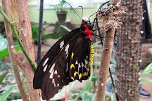 Joseph L. Popp, Jr. Butterfly Conservatory, Oneonta, United States