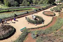 Botanical Gardens, Ooty (Udhagamandalam), India