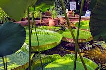 University of Bristol Botanic Garden, Bristol, United Kingdom