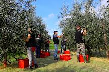 Paolo Bonomelli Boutique Olive Farm, Torri del Benaco, Italy