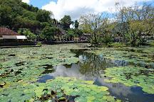 Lotus Lagoon, Candidasa, Indonesia
