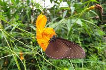 Kuang Si Butterfly Farm, Luang Prabang, Laos