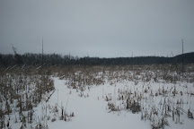 Mills Block Forest, Thunder Bay, Canada