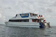 Dolphin Wild Island Cruises, Brisbane, Australia