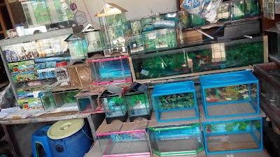Toko Jual Ikan Cupang Hias Aquarium Mini Banten 62 822 1028 0990