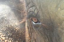 Elephantstay, Ayutthaya, Thailand