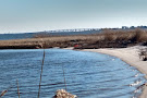 Cattus Island County Park