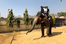Elephant Joy, Jaipur, India