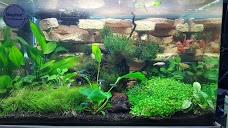 Underwater Environments Aquarium by Pets Plus dubai UAE