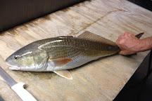 Fish Southwest Fl, Fort Myers, United States