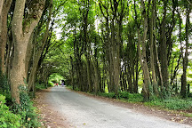 Courtown Woods, Gorey, Ireland