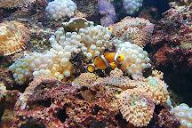 Aquarium tropical des Pyrenees, Pierrefitte Nestalas, France