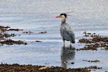 Loch Fleet National Nature Reserve, Golspie, United Kingdom