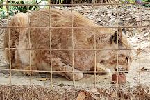 Big Cat Rescue, Tampa, United States