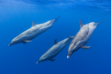 Dolphin Excursions Snorkel Adventure, Waianae, United States