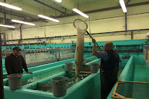 Linesville Fish Hatchery, Linesville, United States