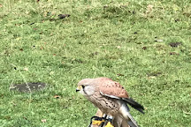 Finn Falconry, Oban, United Kingdom