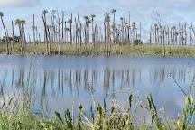 Orlando Wetlands Park, Christmas, United States