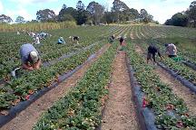 McMartin's Farm, Bli Bli, Australia