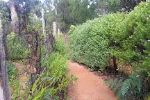 Boranup Forest Maze, Margaret River, Australia