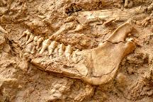 West Coast Fossil Park, Vredenburg, South Africa