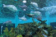 Florida Keys National Marine Sanctuary, Florida Keys, United States