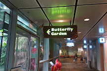 Butterfly Garden, Singapore, Singapore