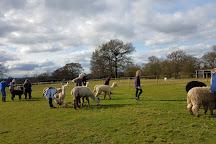 Lucky Tails Alpaca Farm, Atherstone, United Kingdom