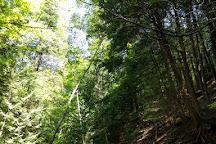 Big Ravine Trail, Bayfield, United States